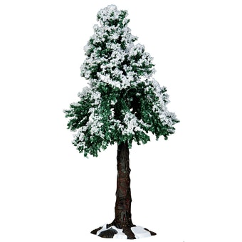 Winter Redwood Tree