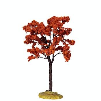 Yellowwood Tree  Medium