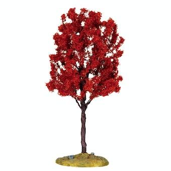 Baldcypress Tree  Medium