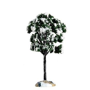 Balsam Fir Tree, Small