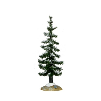 Blue Spruce Tree, Small