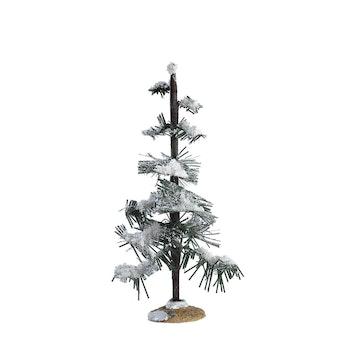 Glittering Pine, Medium