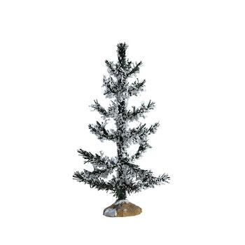 White Pine, Medium