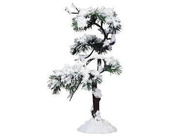 Aspen Pine Tree - B Large