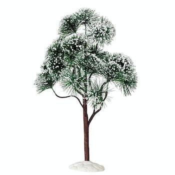 """12"""" Mountain Pine"""