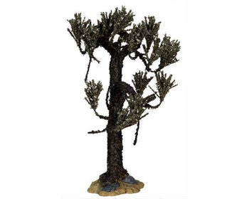 Withered Cypress Tree