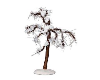 Winter Cypress Tree Medium