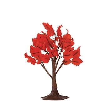 6 Maple Tree