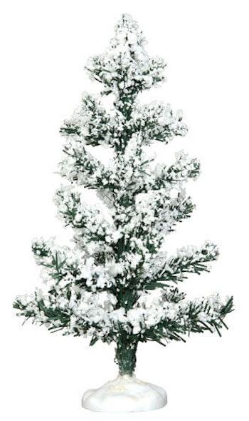 White Pine  Medium