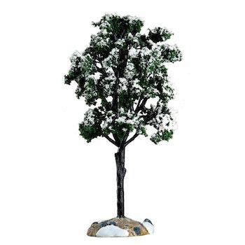 Balsam Fir Tree, Large