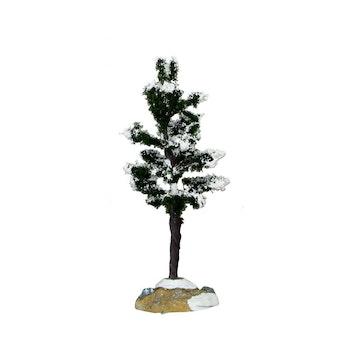 Conifer Tree, Small