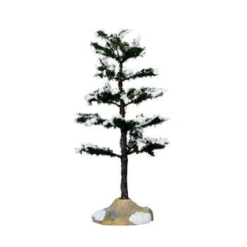 Conifer Tree, Medium