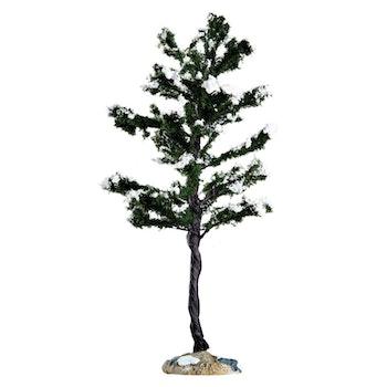 Conifer Tree, Large