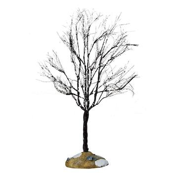 Butternut Tree, Large