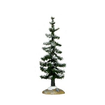 Blue Spruce Tree, Small