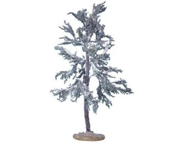 Douglas Fir Tree Extra Large