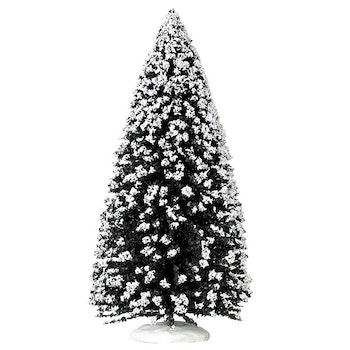 12 Evergreen Tree