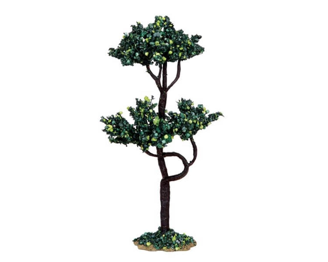 Buckeye Tree Medium