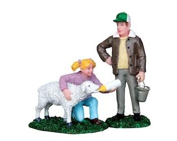 Feeding Lamb