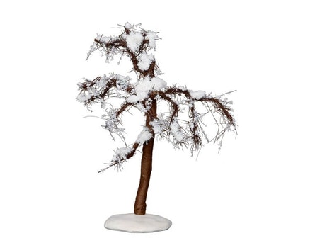 Winter Cypress Tree Medium