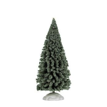 6 Spruce Tree