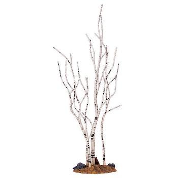 9 Birch Tree