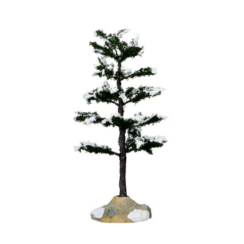 Conifer Tree, Medium