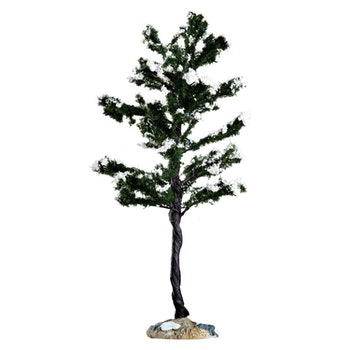 Conifer Tree, Large