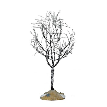 Butternut Tree, Small