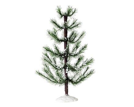 White Pine Large