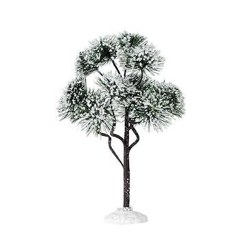 9 Mountain Pine