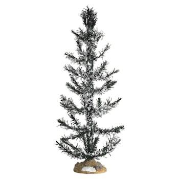 White Pine, Large