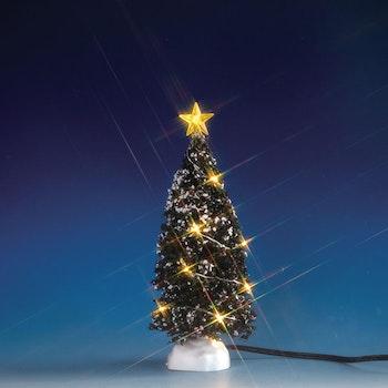 Clear Light Evergreen Tree, Medium