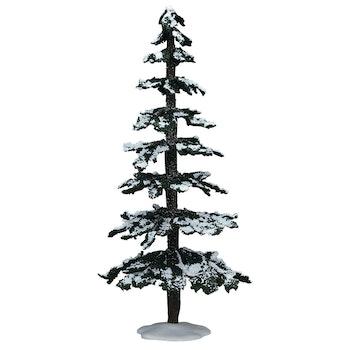 12 Snowy Cedar