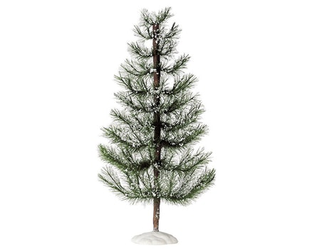 White Pine Jumbo
