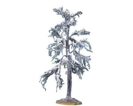 Douglas Fir Tree Large