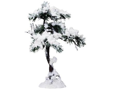 Aspen Pine Tree - A Large