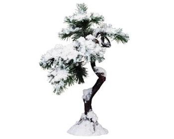 Aspen Pine Tree - C Large