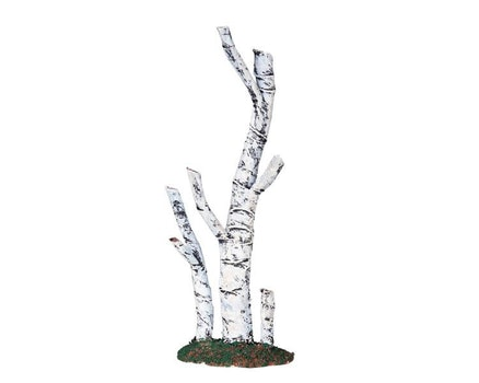 Paper Birch Tree Medium
