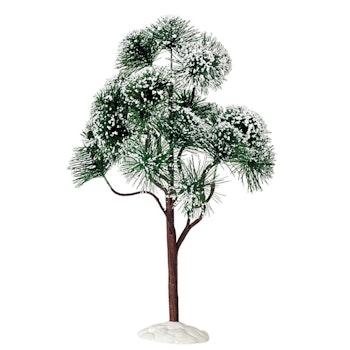 12 Mountain Pine