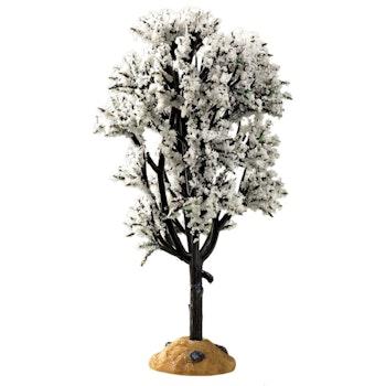 White Hawthorn Tree