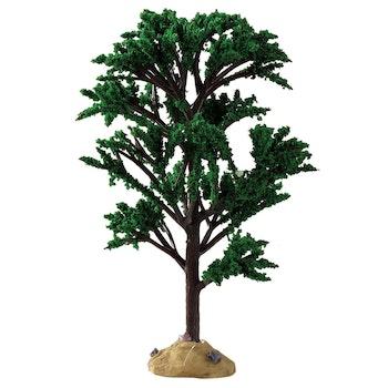 Green Elm Tree