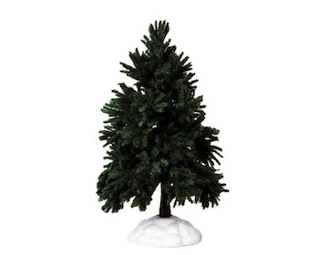 Evergreen Fir Tree Large